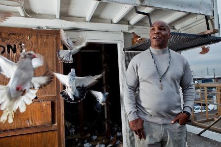 Главная страсть Тайсона - голуби